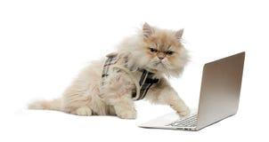 Pawing persiano ad un computer portatile Fotografia Stock Libera da Diritti