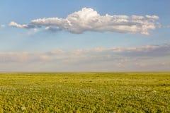 Pawnee National Grassland in springtime Royalty Free Stock Image