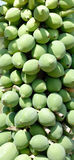 Pawpaw fruit. It is growing pawpaws on tree Royalty Free Stock Images