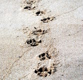 Pawprint Стоковая Фотография RF