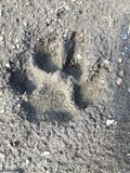 Pawprint Photos stock
