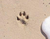 Pawprint bij het strand Stock Foto