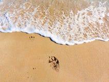 Pawprint bij het strand Stock Foto's