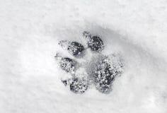 Pawprint en nieve Fotografía de archivo libre de regalías