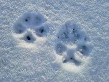 2 Pawprints в снеге - ландшафт Стоковые Изображения