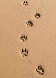 pawprints 图库摄影