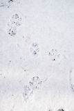 Pawprints Стоковое фото RF