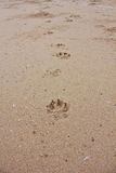 Pawprints on the beach Royalty Free Stock Photography