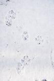 Pawprints Royalty Free Stock Photo