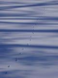 Pawprints nella neve immagine stock libera da diritti