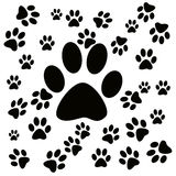 Paws Royalty Free Stock Image