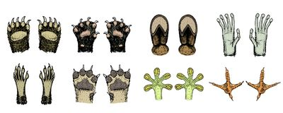 Paws of animals or footprints and wildlife. Bird and sea creatures, hands of monkey and dog, bear and frog, tentacles of. Octopus and cat, hoof of cow. Domestic Royalty Free Stock Photos