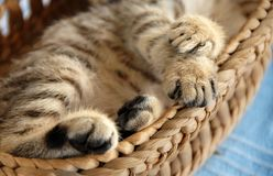 Paws in basket Royalty Free Stock Photo