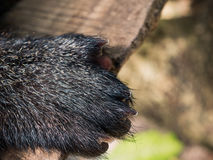 Paws bear Royalty Free Stock Photos