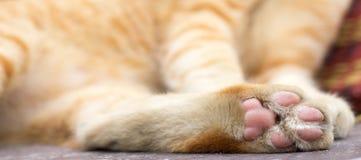 Paws cat close-up Stock Photography