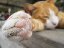 Paws cat close-up. Outdoor blur Stock Image