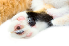 Paws of a cat and kitten Royalty Free Stock Images
