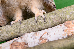 Paws and claws Stock Photos
