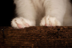 Paws Royalty Free Stock Photo
