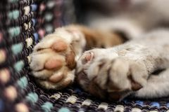 Are these Paws Cute or dangerous. These cat paws look really dangerous. Would you dare to annoy this one after looking at her dangerous hunting paws stock photography