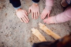 Paws of a dog and hands of people stock images