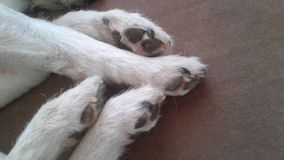 Paws stock images
