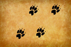 Paws footprints. On the brown background Stock Photos