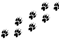 Paws footprints. On the white background Royalty Free Stock Photo