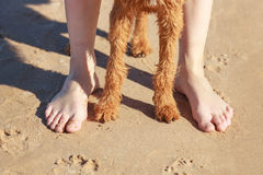 Paws red dog near the girl`s feet. Paws dog near the girl`s feet stock images