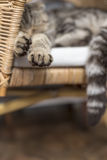Paws of slipping cat Royalty Free Stock Image