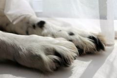 Paws for a thought Stock Image