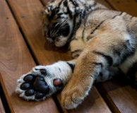 Paws For Thought Royalty Free Stock Image