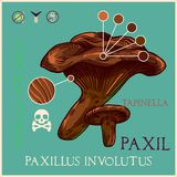 Paxil mushroom royalty free illustration