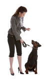 Pay attention. Pretty young woman directing her doberman pincher Stock Photos
