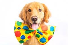 Payaso del perro Imagenes de archivo