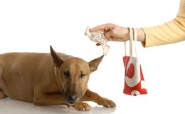 Paying for expensive dog Royalty Free Stock Photography