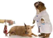 Paying for vet bill Stock Images