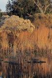 Paynes-Grasland im goldenen Licht stockbild