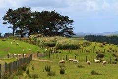 Pays d'élevage des moutons du Nouvelle-Zélande, la terre du nord Image stock