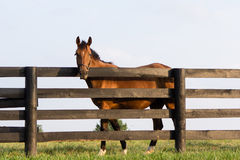 Pays de cheval Photographie stock