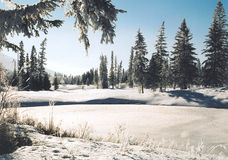 Pays de l'hiver Photographie stock