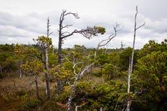 Pays de la côte Pacifique Image stock