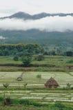 Pays de paddy de montagne Image stock