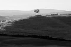 Pays de Sienne photo stock