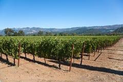 Pays de vin Image stock
