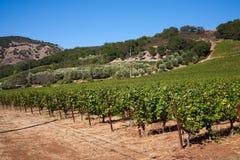 Pays de vin Photo libre de droits