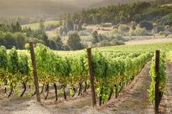 Pays de vin de l'Orégon images stock