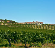 Pays de vin, la Californie méridionale Photos libres de droits