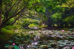 Paysage à feuilles persistantes de nature Parc de Bangkok Image stock