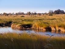 Paysage à la rivière d'Okavango photographie stock libre de droits